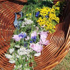 Cursus Making sense(s) of herbs – Hartige variant – Voorjaar – Midweek