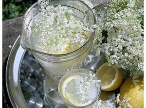 Vlierbloesemglyceriet – Siroop zonder suiker