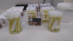 Gastcolleges etnobotanie en fytochemie Wageningen Universiteit
