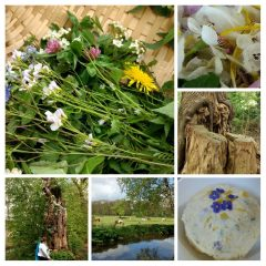 Cursus Making sense(s) of herbs – Pittige variant