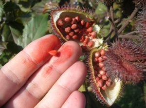 Waarom de oplosbaarheid van plantenstoffen zo belangrijk is