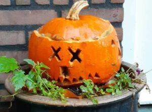 Halloween en etnobotanie van de pompoen